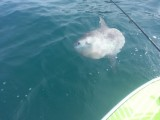 stand up paddle boarding sunfish