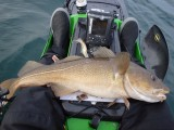 PB large cod kayak fishing