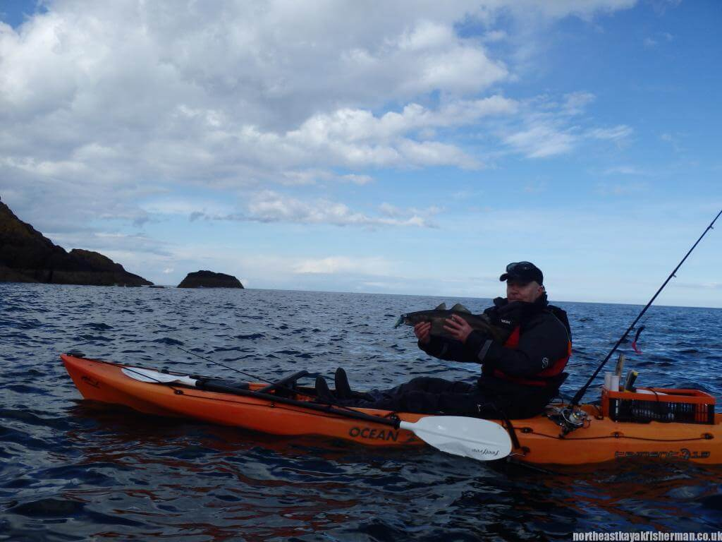Kayak Fishing St Abbs Pollock
