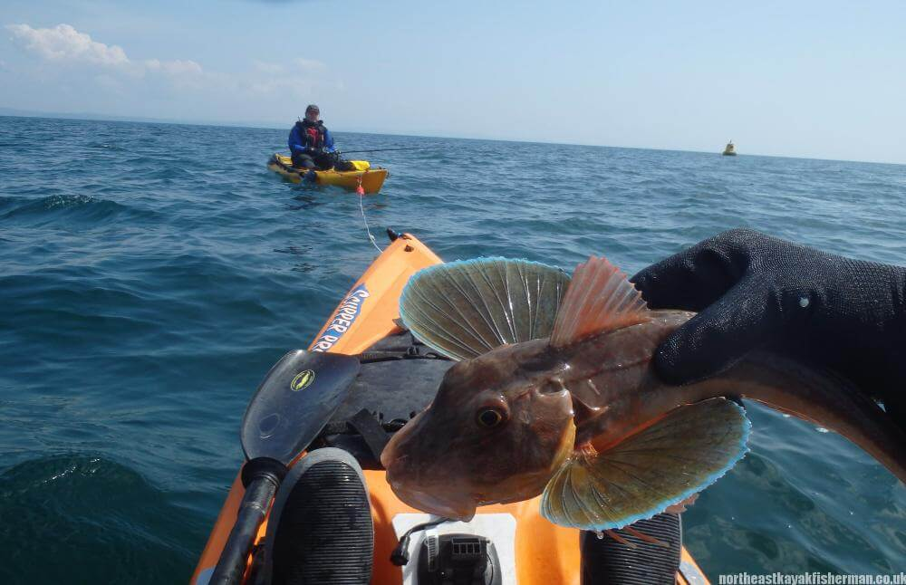 red gurnard - South West Scotland Kayak