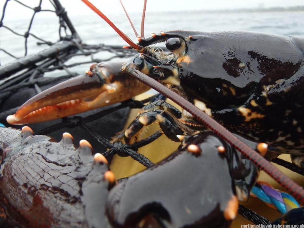 Lobster Fishing Kayak